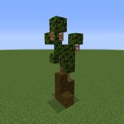 Baby Palm Tree