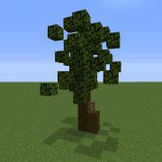 Baby Palm Tree 3