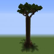 Tall Baobab Tree 3